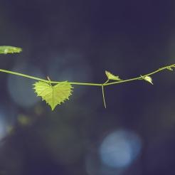 leafsun